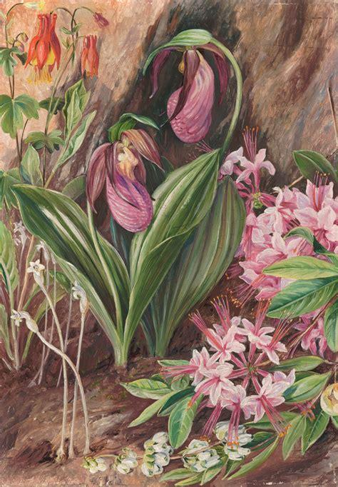 194 Wild Flowers From The Neighbourhood Of New York