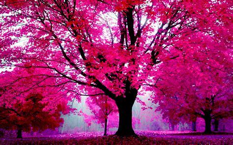 pretty pink wallpaper  desktop  images