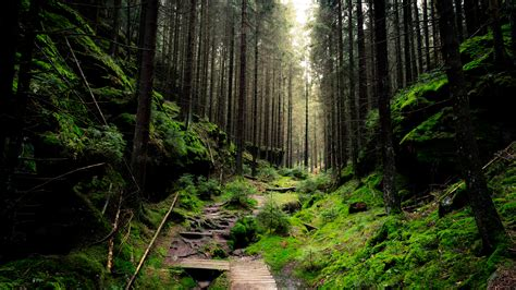 Thick Forest 5K Wallpapers   HD Wallpapers   ID #28298