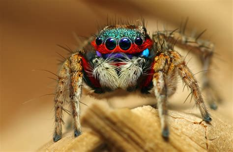 insect spider macro eyes wallpaper