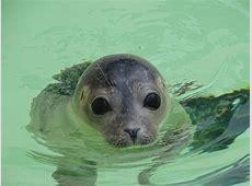 Kostenloses Foto Seehund, Tier, Säugetier Kostenloses