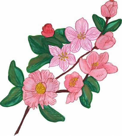 Flower Ornament Paint Painted Transparent Vol Onlygfx