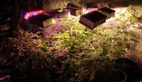 diy led grow lights  growing plants indoors home  gardening ideas home design decor