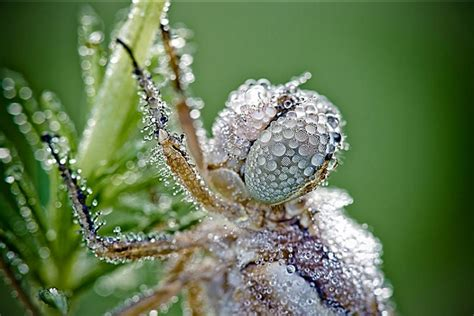 Flares Into Darkness Insects Covered With Dew