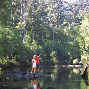 warren national park attraction tour pemberton