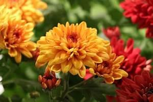 Welche Blumen Blühen Im Winter Draußen : welche blumen balkonpflanzen kann man im september pflanzen ~ Watch28wear.com Haus und Dekorationen