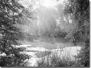Herbst Schwarz Weiß : fotofolie aufkleber mit herbst motiv fotodruck ~ Orissabook.com Haus und Dekorationen