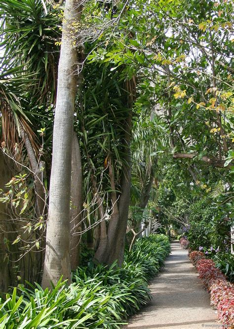 Der Botanische Garten Von Puerto De La Cruz  Puerto De La