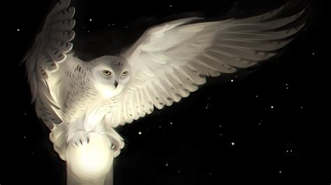Black Owl Wallpapers by Wallpaper White Owl Artwork Hd Creative Graphics 7037