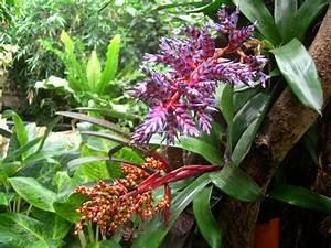 Tropical+Rainforest+Plants | tropical rainforest plants ...