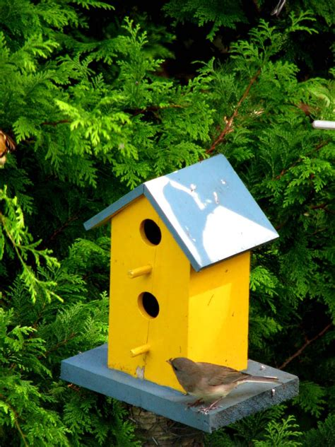 yellow finch bird house plans birdcage design ideas