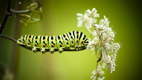 full hd wallpaper caterpillar striped stick desktop
