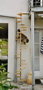 cat steps ladder spiral stair and staircases on