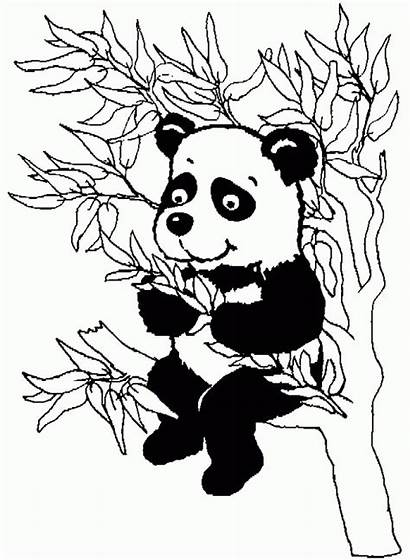 Panda Coloring Bamboo Album Coloriages Tree Animaux