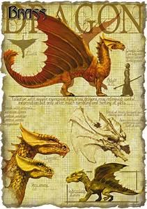 Radiate Light Brass Dragon The Forgotten Realms Wiki Books Races