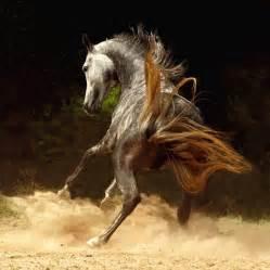 Beautiful horses - Horses Photo (17306125) - Fanpop - Page 8