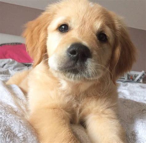 chien cuisine 12 photos d animaux trop mignons shanna kress
