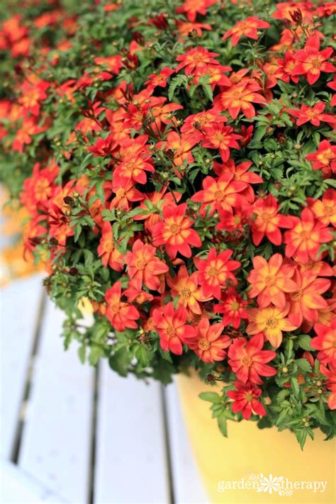 Heattolerant Plants That Love The Sun  Garden Therapy