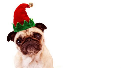 Many cute christmas dogs on your screen, floating shining particles, parallax effect! Cute Pug Puppies Wallpaper image | Free HD Wallpaper