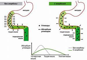 Комнатное растение от диабета