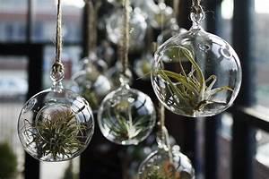 Tillandsien Im Glas : ideas para decorar tu casa con plantas de aire ~ Eleganceandgraceweddings.com Haus und Dekorationen
