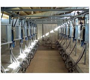 12 Point Herringbone Milking Parlor  Capacity  15 Cattle At A Time  Rs 1200000   Piece