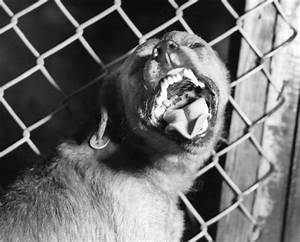 Canine Rabies Imported into America - Body Horrors