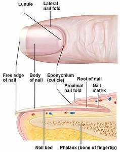 13 Best Chapter 8  Structure Of The Nails Images On