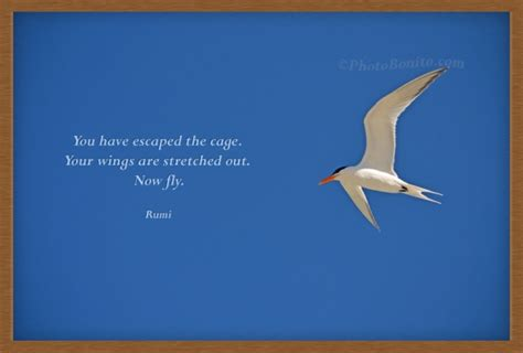 escaped  cage  wings  stretched