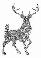 Coloring Deer Pages Hunting Elk Printable Getcolorings sketch template