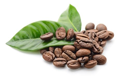 Coffee-leaf Tea Packs Antioxidant Punch Kicking Horse Coffee On Sale Toronto Pictures In Cups Hour Owl Three Sisters Real Phone Number Funny Drinkers