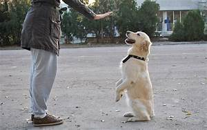 How to become a dog trainer 5 steps wikihow for Become a dog trainer