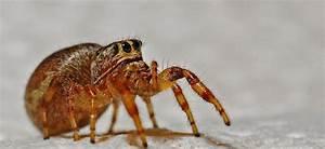 Se Débarrasser Des Araignées : d sinsectisation d barrassez vous des araign es ~ Louise-bijoux.com Idées de Décoration