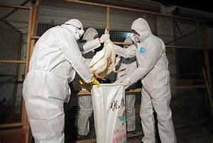 Cdc Concerned By H7n9 Bird Flu U0026 39 S Sudden Spread In China