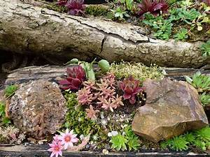 Pflanzen Für Steingarten : einen steingarten anlegen nachgeharkt ~ Michelbontemps.com Haus und Dekorationen