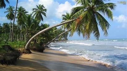 Tropical Playa Palmeiras Coson Wallpapers Desktop Las