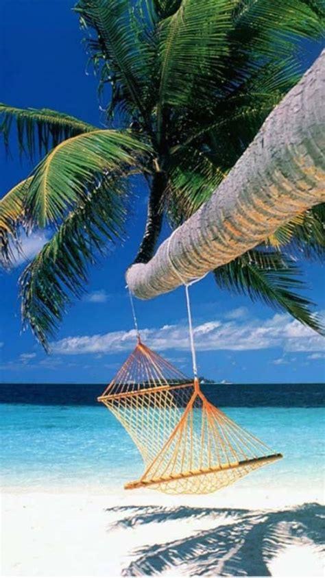 relaxation  hammock hanging  palm tree   sunny