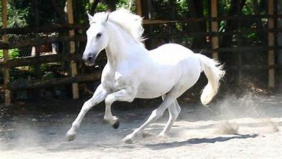 Horse Horses Fanpop Stallion Equestrian Pretty Snow