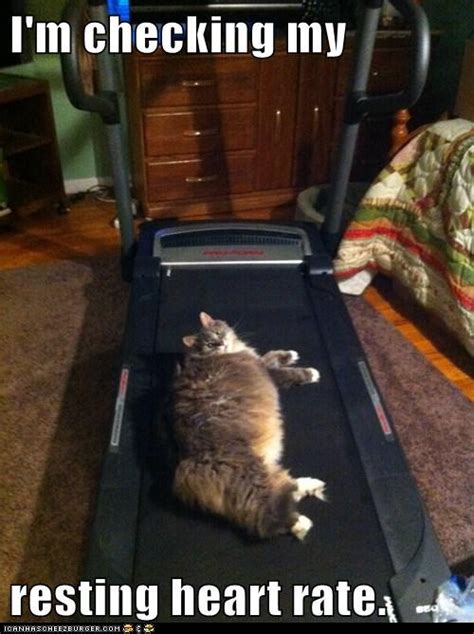 cat funny heart rate cats treadmill animals checking memes exercise tabby fat animal resting cute exercising put humor lolcats sleeping