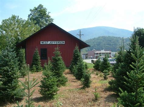best nc christmas tree farm 49 best images about ashe co nc on