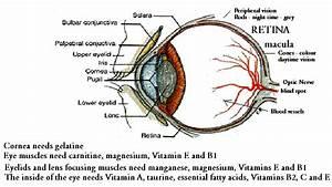 Nutrients In Eye