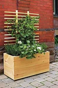 Kletterpflanzen Für Balkon : die besten 25 balkon sichtschutz ideen auf pinterest balkon ideen balkon und sichtschutz garten ~ Buech-reservation.com Haus und Dekorationen