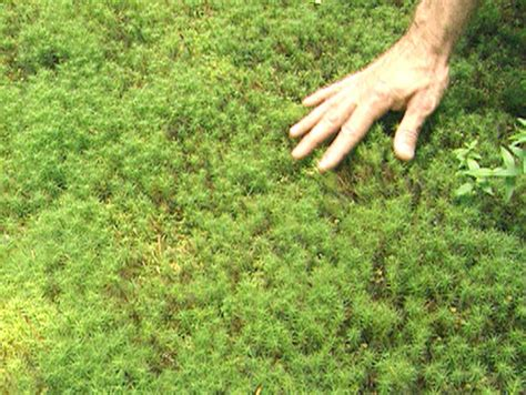 different types of moss different types of mosses 28 images the moss flickr photo sharing moss types google
