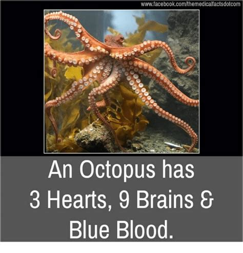 Octopus Meme Octopus Meme 28 Images Octopus Meme 28 Images The Best