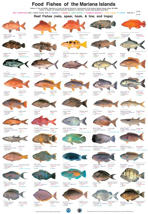 fish names aquarium fishes picture with names fishes names and pictures 2017 fish tank maintenance