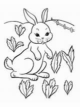 Coloring Pages Rabbits Animals Rabbit Bunny Printable Sheets Sheet Fun Print Printables Visit Mycoloring sketch template
