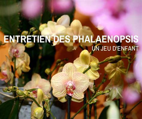 tailler une orchidee en pot entretien phalaenopsis soin arrosage et taille