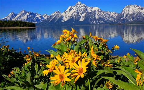 jackson lake lak  wyoming grand teton national park