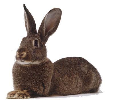 cuisiner un lapin entier rédiger ou cuisiner c 39 est la même chose c 39 est réduire