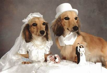 Dog Marriage Married Bride Pet Marry Couple